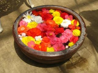 水を入れた器に敷き詰められたベコニアの花