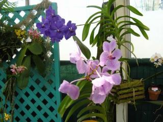 網目模様の花びらが特徴の花(名称不明)