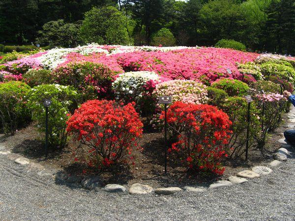 ツツジの花各種。