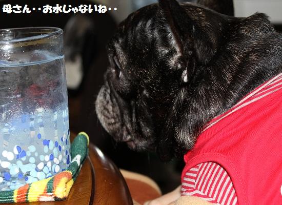 ①お水じゃないね