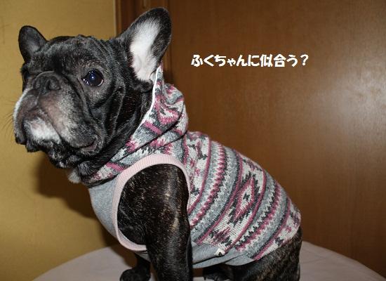 コジ君のお洋服④