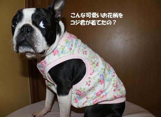 コジ君のお洋服⑤