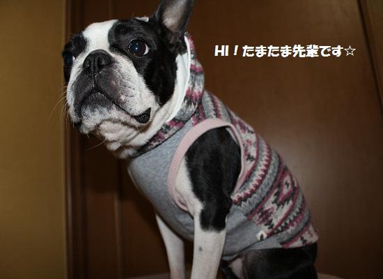 コジ君のお洋服②