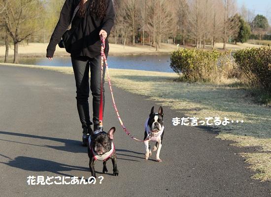 ★わんぱくお散歩②