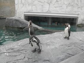 ペンギン外
