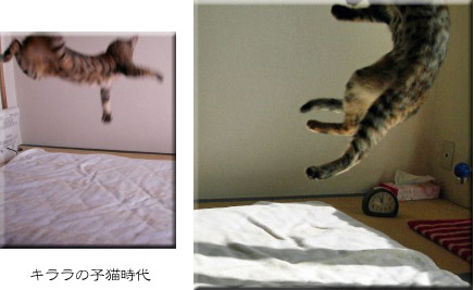 キララの子猫時代 1