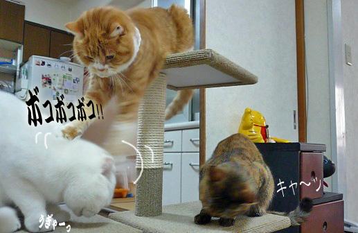 突然猫パンチ連発ピー