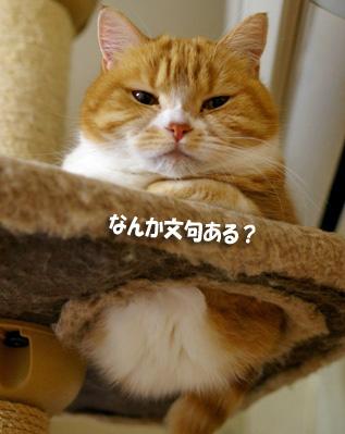 タワーぷぷのコピー
