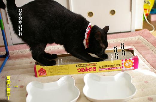 猫皿とクー7のコピー
