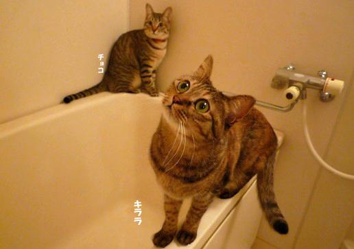 お風呂場のコピー