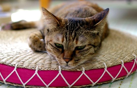 涼しいところに寝出したキララ