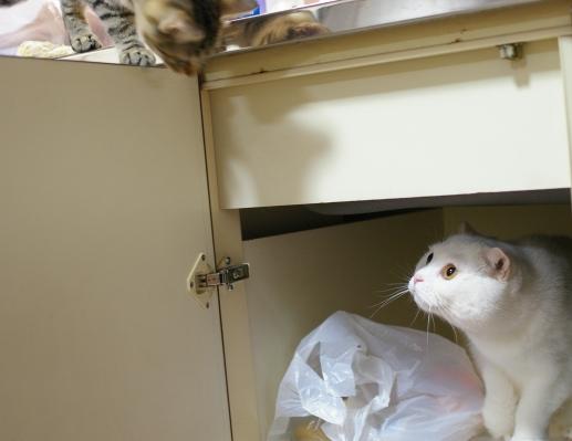 洗い場の下