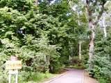 夏の木の広場