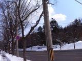 桜のメイショ