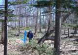 春の我が家の木