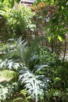 2010  5 18 ジャングル計画 001_R