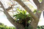 タンカン20101121_08