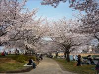 2011-04-10_155317.jpg