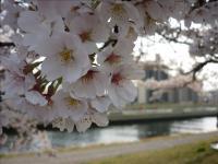 2011-04-10_163228.jpg