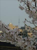 2011-04-10_164336.jpg