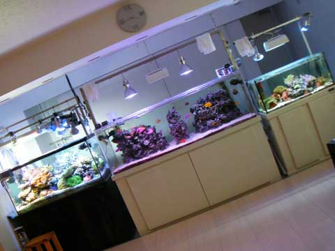 20091211room.jpg