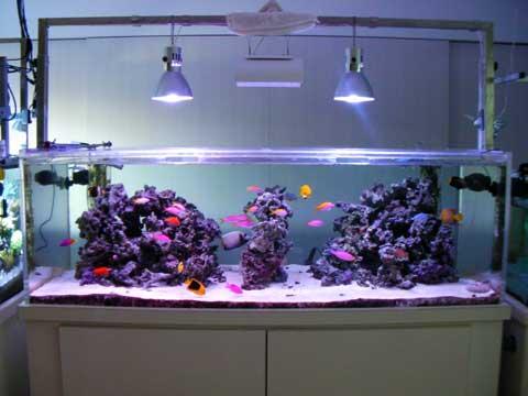 20091215fish1.jpg
