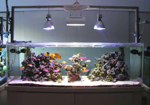 20091215fish2.jpg