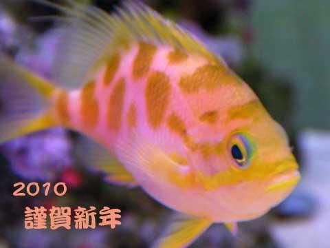 20100101ganntann.jpg