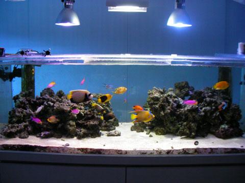 20100701fish1.jpg