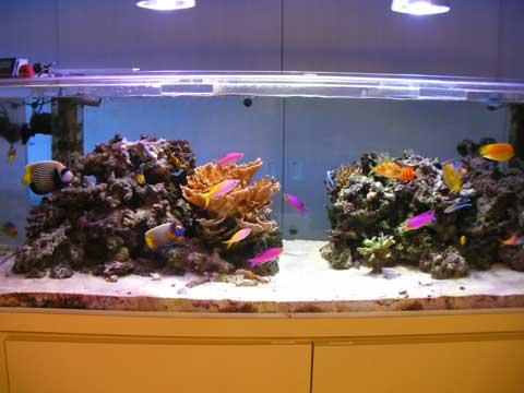 20100730fish1.jpg