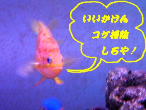 20130820madara.jpg