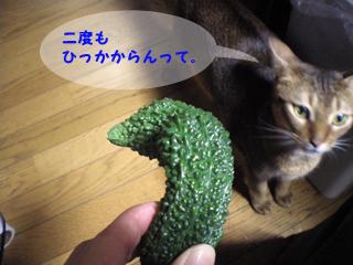 ゴーヤと猫2