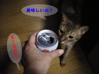 ビールと猫