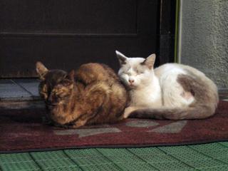 連結している猫