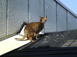 屋根でたたずむ猫