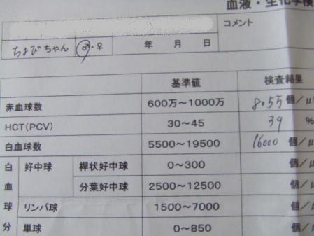 123_20110807110211.jpg