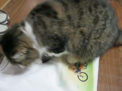 すいかネコTシャツとアニー-6