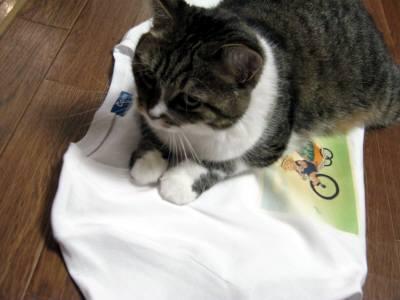 すいかネコTシャツとアニー-8