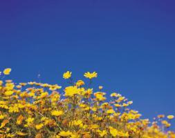 夏黄色い花