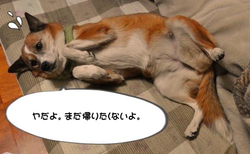 039_20100123225303.jpg