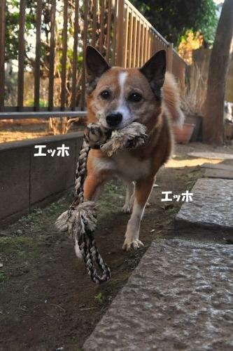 052_20100131005637.jpg