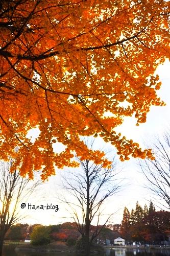 125_20101127195043.jpg