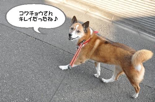135_20100106015716.jpg