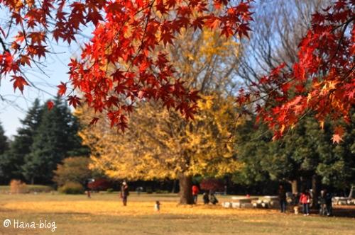光が丘公園 083