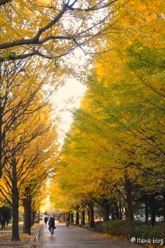 光が丘公園 287