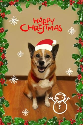 christmas tavie
