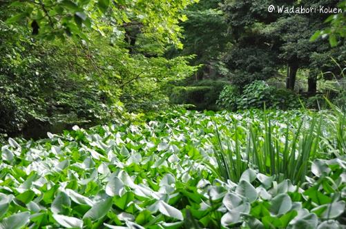 和田堀公園 053
