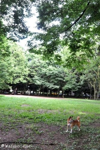 和田堀公園 059
