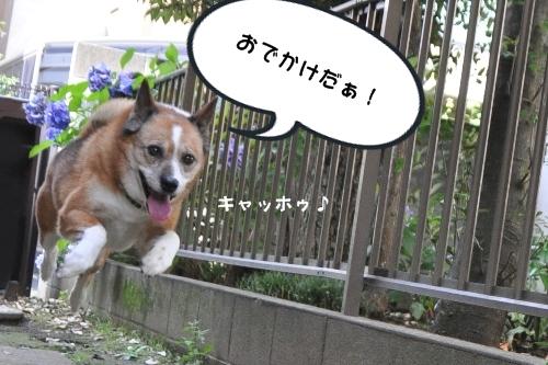 和田堀公園 005