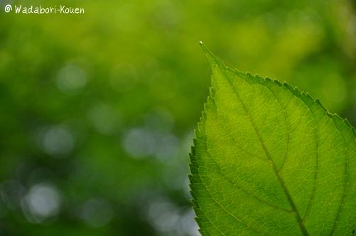 和田堀公園 086